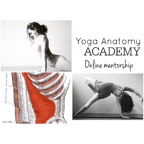 learn yoga anatomy online with a doctor of physical therapy