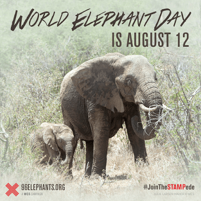 celebrating world elephant day