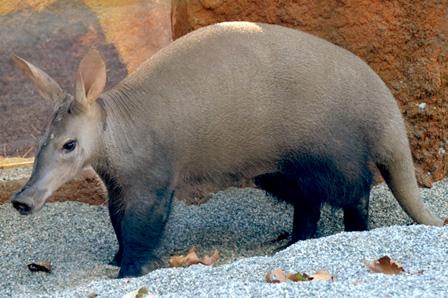 Mammals  Zoo Animals  The Sacramento Zoo  Sacramento CA