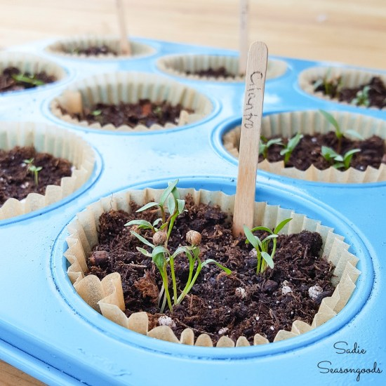 Propagation tray or seed pots by upcycling a muffin pan from the thrift store