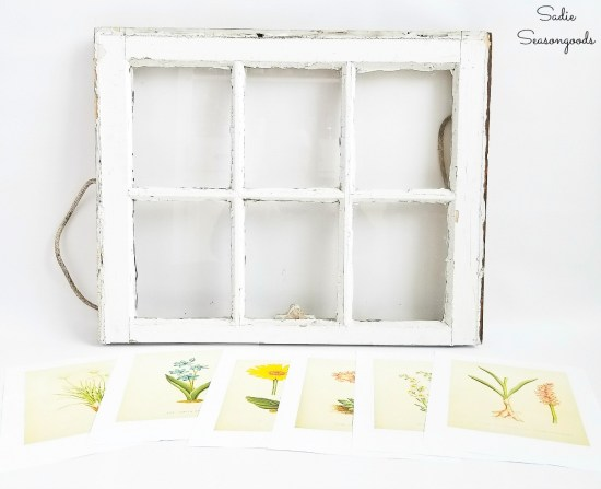Upcycling a vintage window to use as botanical wall art