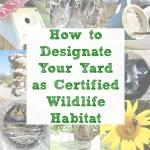 How to Designate Your Yard as Certified Wildlife Habitat