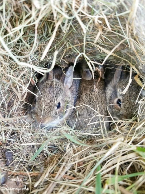 Places to Raise Young with a bunny nest as Certified Wildlife Habitat