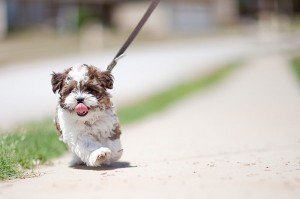 leash training