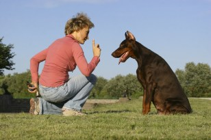 Insurance for dog trainers