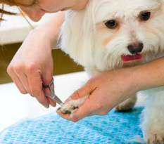 Animal Hospital and Pet Grooming Insurance