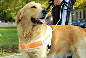 service dogs in sports facilities
