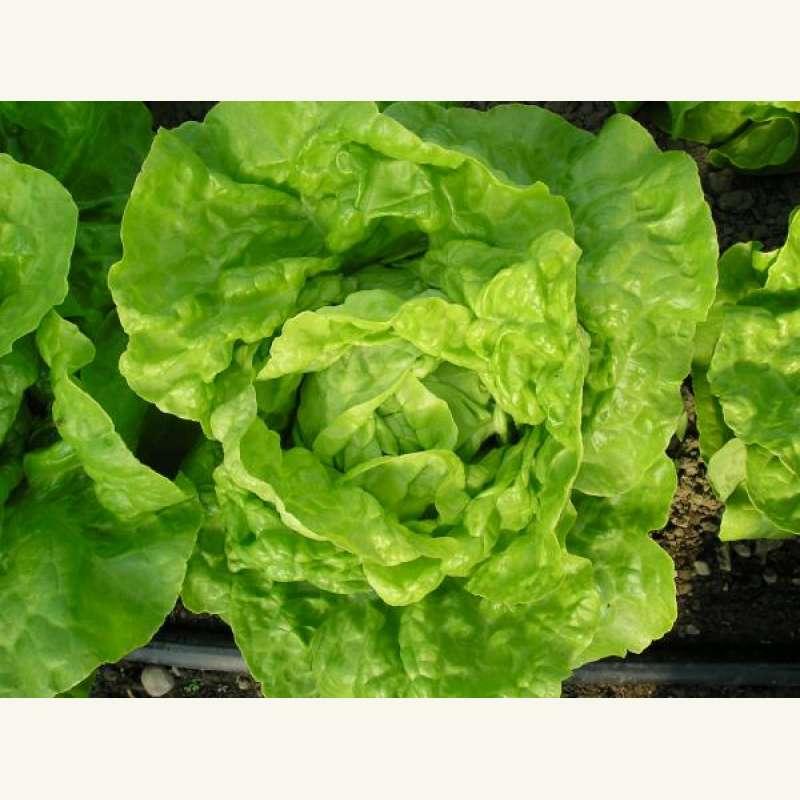 Bio Samen Kaufen bio chia samen kaufen das superfood f r die gesundheit chia samen kaufen oder