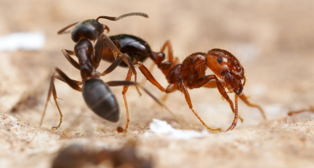 Labour Love: An ant's world