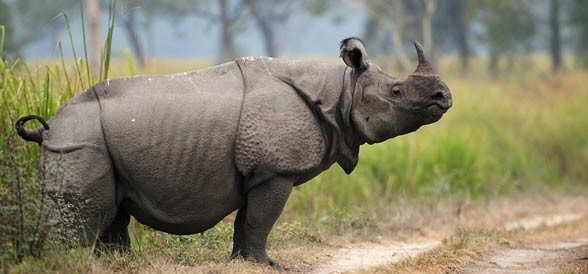 Kaziranga National Park The Beautiful Land Of The Rhino