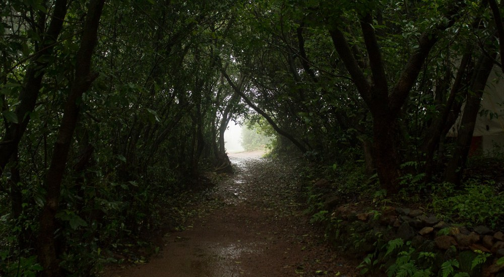 Saevus Amboli-pathways_RK Best Places to Catch the Creepies and Crawlies this Monsoon ! Exploration  Wildlife Sanctuary Monsson Matheran Herping Goa Creepies Crawlies Coorg Best Places Amboli Agumbe
