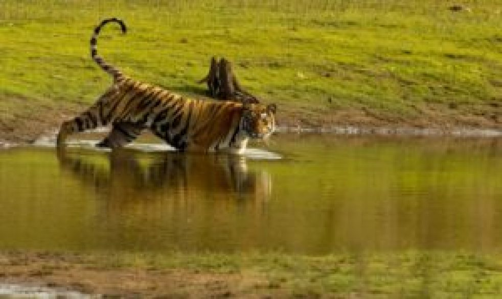 Global Tiger Day : Best places to spot tigers in India