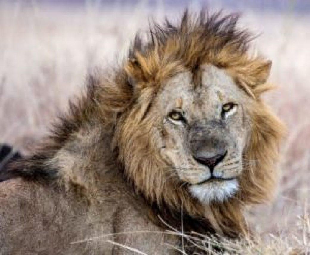Masai Mara – The Ultimate Destination Wild!