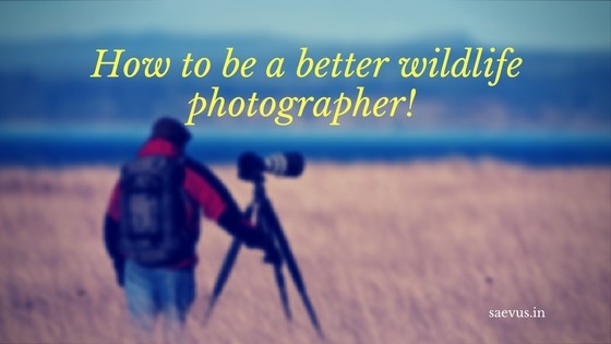 HOW TO BE A BETTER WILDLIFE PHOTOGRAPHER!