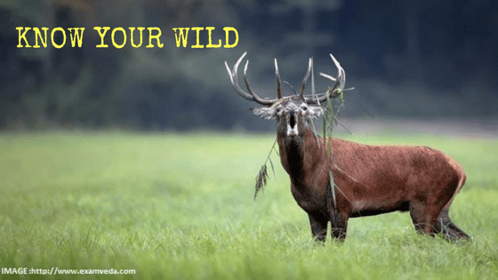 KNOW YOUR WILD: THREATENED WILDLIFE FROM INDIA