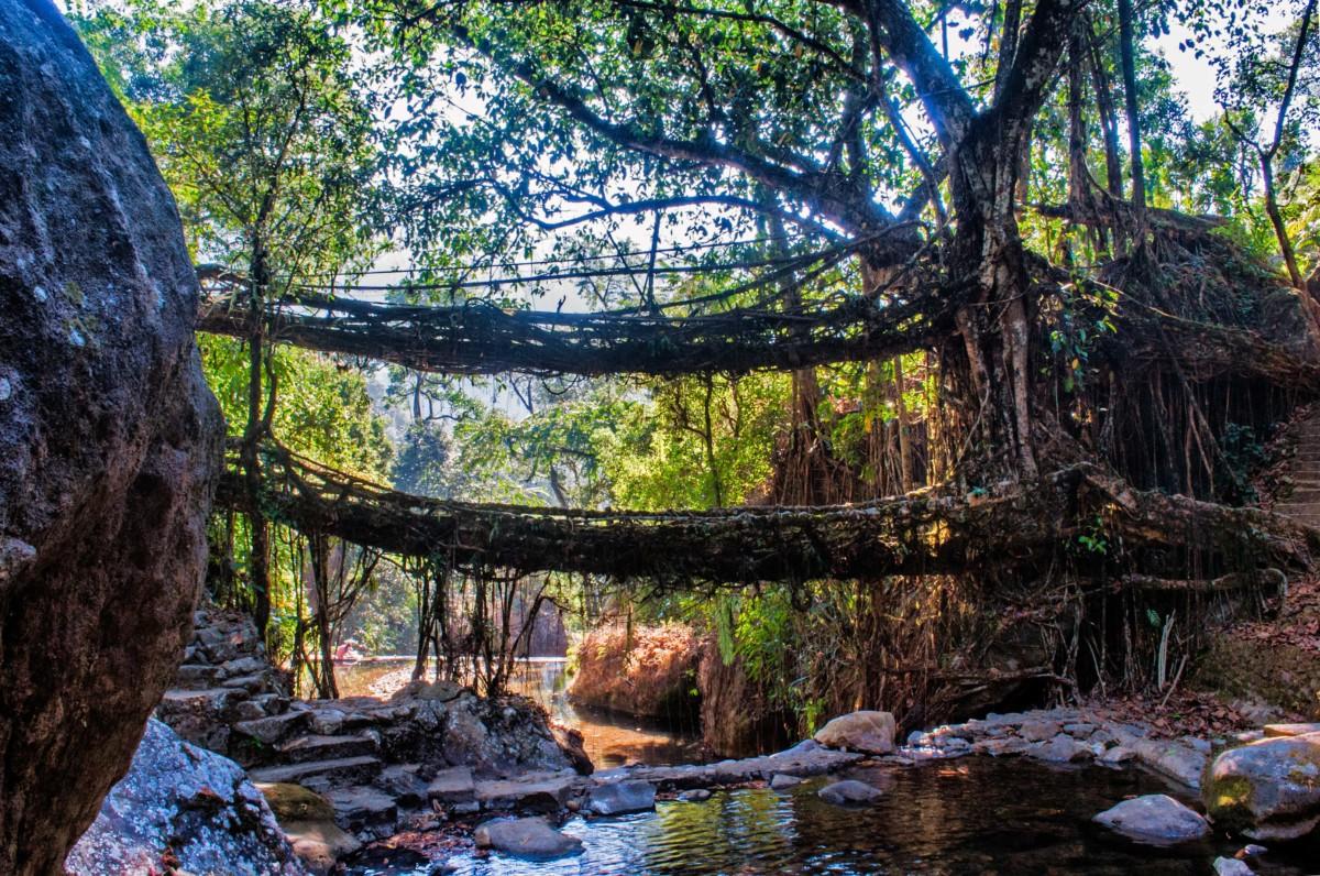 A Trek to the Double Decker Root Bridge of Cherrapunjee_Bridge
