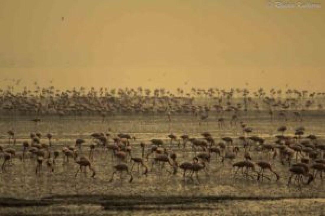 Flamingos at Sewri Creek