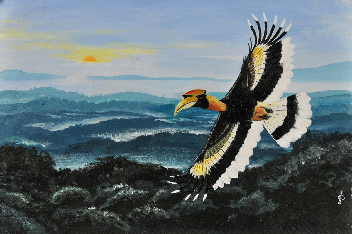 Saevus great-hornbill Gardeners of the rainforest Conservation Natural History  Threatened Namdapha india hornbill Arunachal Pradesh