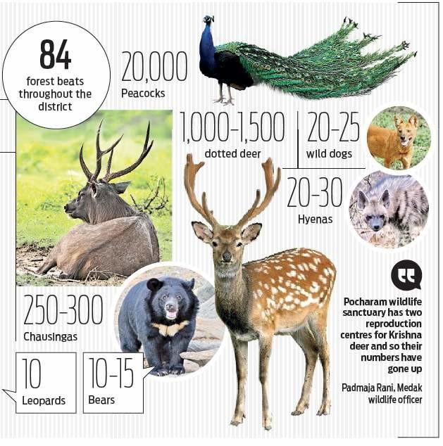 Around ten leopards in erstwhile Medak's forest areas in Telangana: Census
