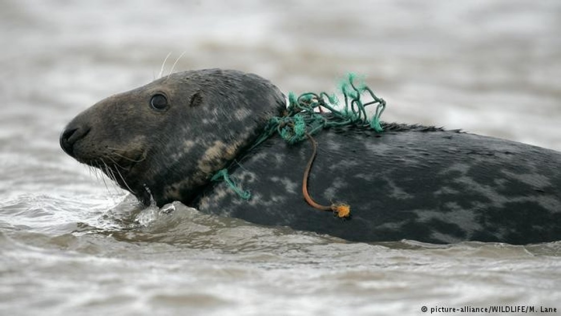 Animals find themselves tangled up in garbage, and microplastics make their way into the food chain | Credit: dw.com