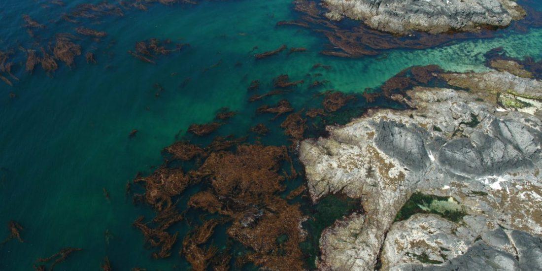 Kelp forest, tide pools and rugged rocks. Alaska, Sitka Sound.