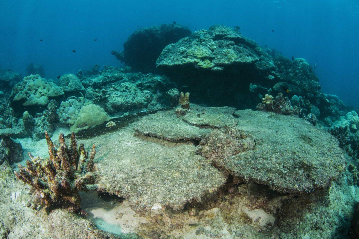 Corals, Off the Menu
