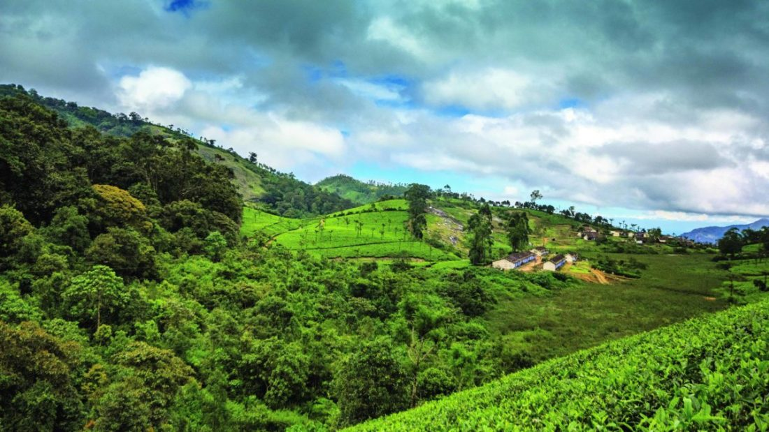 Nestled in the Anamalai Hills of the Western Ghats is the quaint town of Valparai. The landscape here is a mosaic of evergreen forest fragments and plantations.