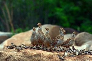 The wild inhabitants of Hampi