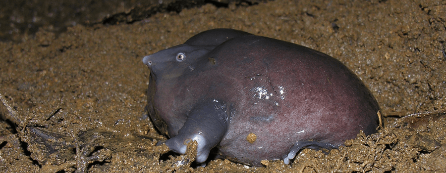 The Purple Frog - Living in the shadow of the dinosaurs