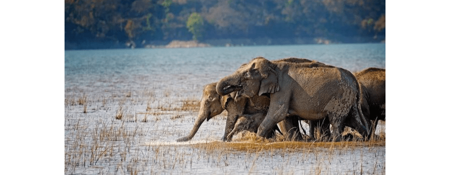 Deforestation and Human-Elephant conflict directly co-related