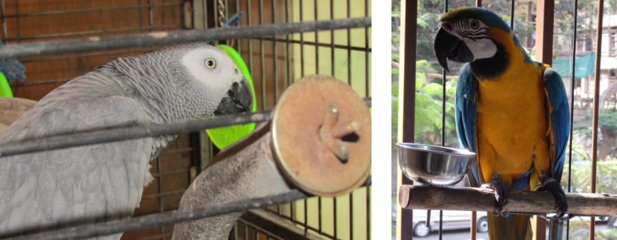 Macaws And Cockatoos