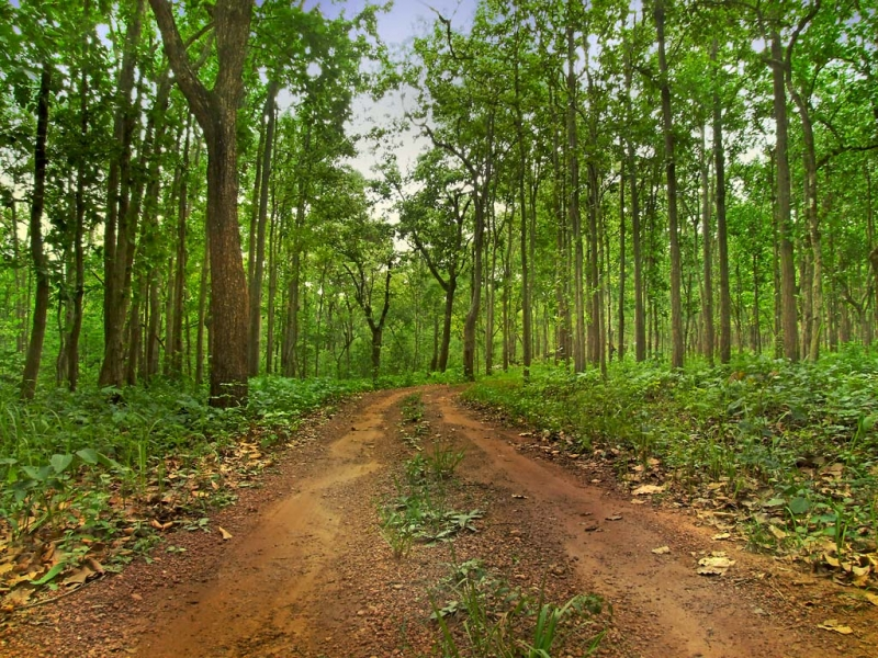 Green India Initiative: A Journey Of Thousand Miles