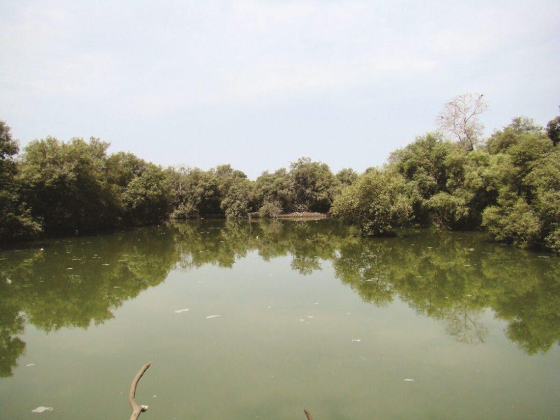 Mangrove City