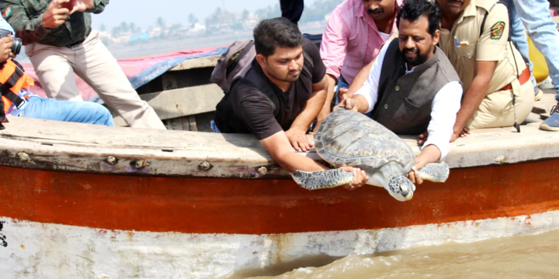A Sea of Hope - Glimpses into Marine Rescue and Rehabilitation