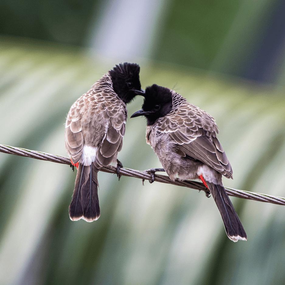 Birding In The Time Of Corona