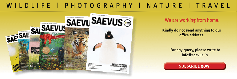 Magazine | Wildlife | Conservation | Photography | Travel | Natural History
