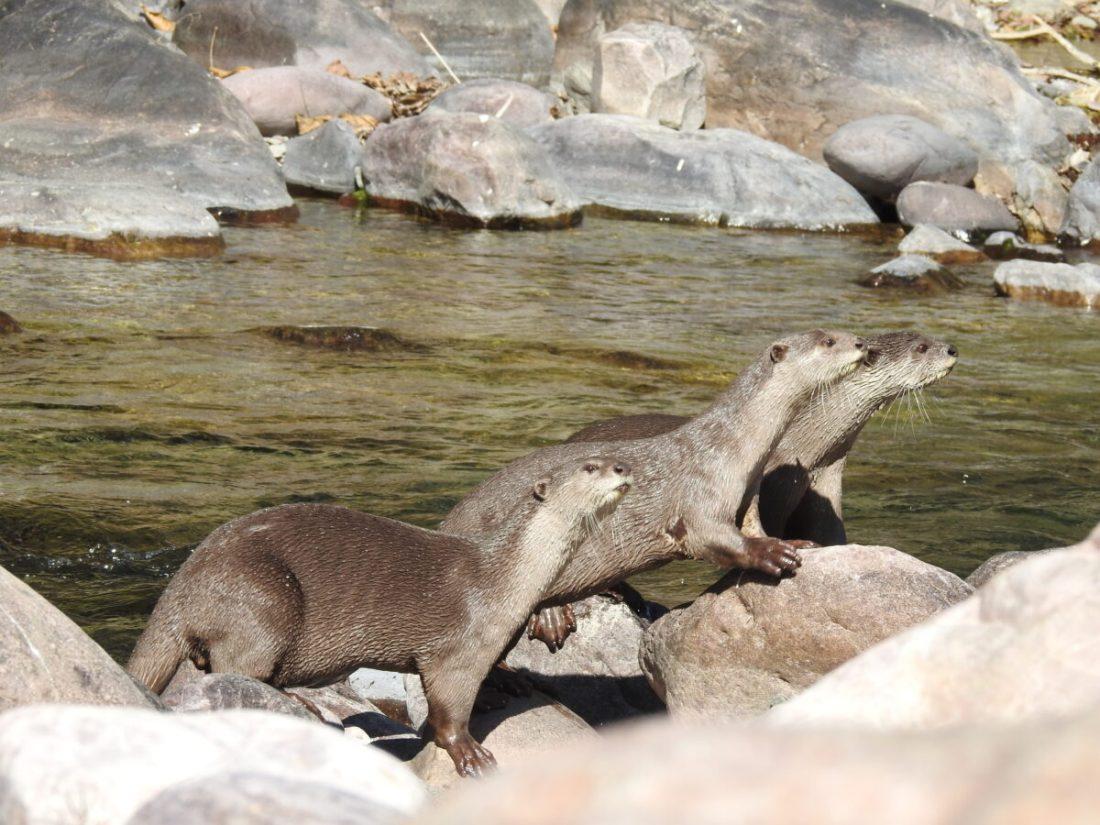 The Secret Lives of Otters