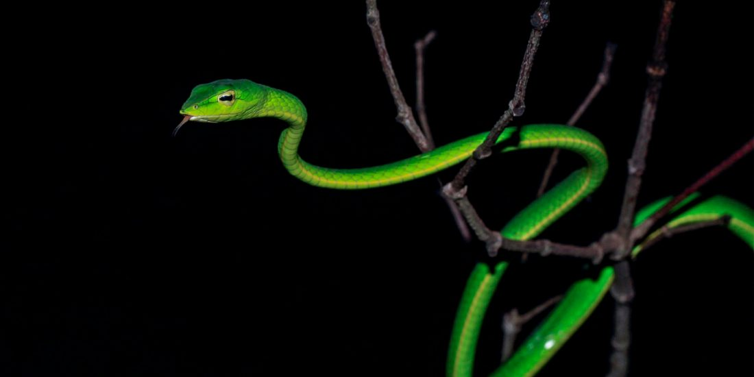 Debunking Common Myths Surrounding Snakes