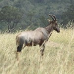 Kenya is known for its abundance of wildlife