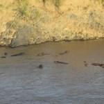 The Big 5 are regularly seen on a standard Kenya safari