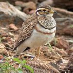 http://www.birdquest-tours.com/Kenya-birding-wildlife-tours/2017