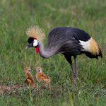 http://www.earlylightphoto.com/album_import.php?Kenya%20Birds-5