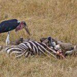 http://www.theworldeffect.com/masai-mara-kenya