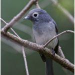 https://thewildernessalternative.com/2013/12/27/birds-of-kenya/kenya-birds-15/