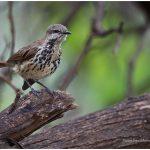 https://thewildernessalternative.com/2013/12/27/birds-of-kenya/kenya-birds-7/