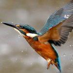 http://www.mytwendesafari.com/bird-watching-photography-tour-in-kenya-2/