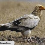 http://www.naturekenya.org/content/birds-danger