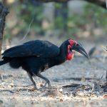 https://www.safaribookings.com/kenya/birds