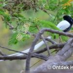 http://www.ontdekkenya.com/E/bird-photography/wild-bird-identification.html