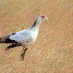 http://abhayavachat.blogspot.co.ke/2013/07/kenya-birds.html